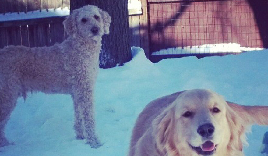 2 dogs playing in the snow